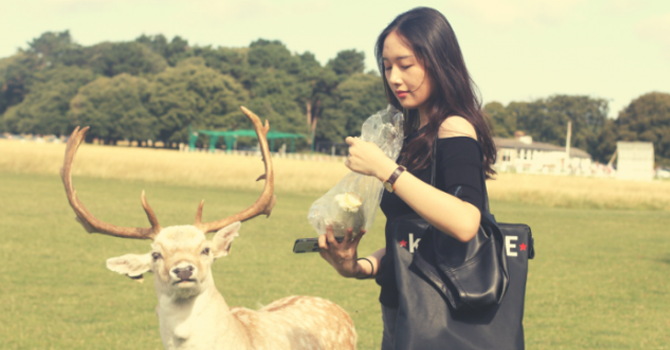 A girl feeds a deer in Phoenix Park