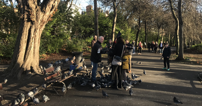 A local man talks to people in the park, surrounded by pigeons