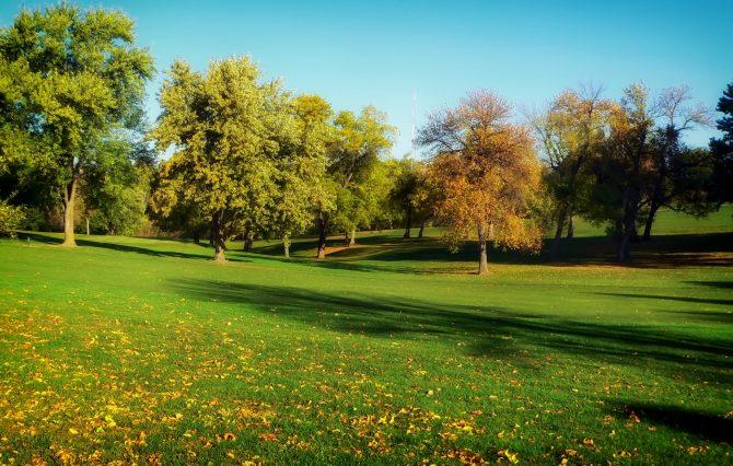 green grass beside trees under blue sky
