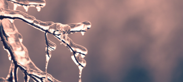 icicles hanging from a tree branch